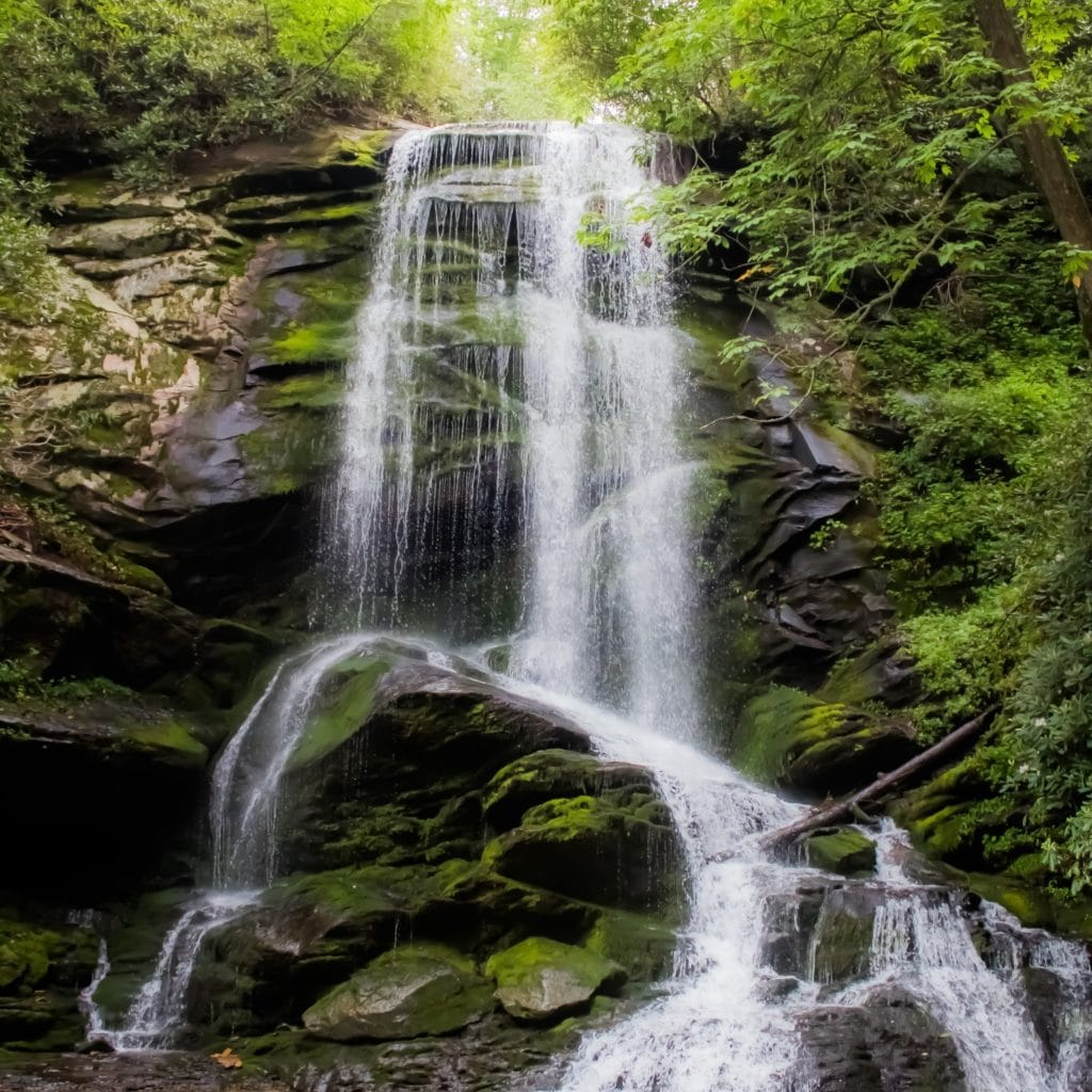 From overwhelm to compassion #245 waterfall and greenery