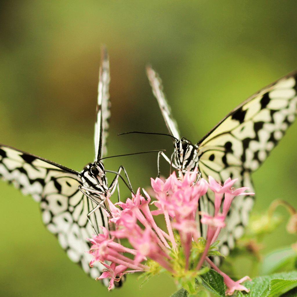 getting help tapping image of two butterflies