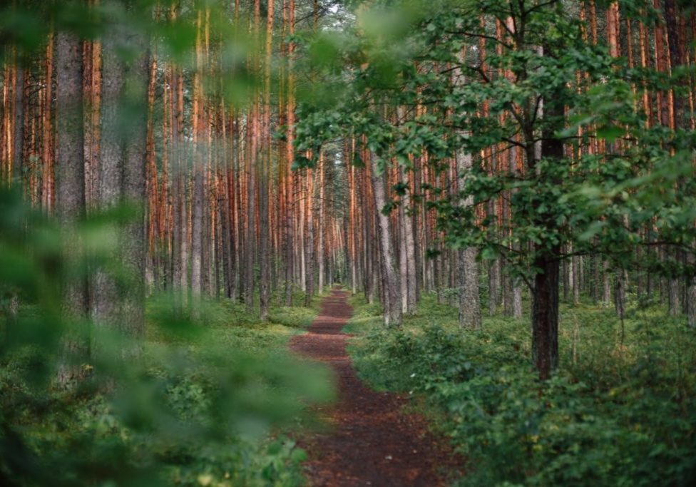 trail in green, green woods