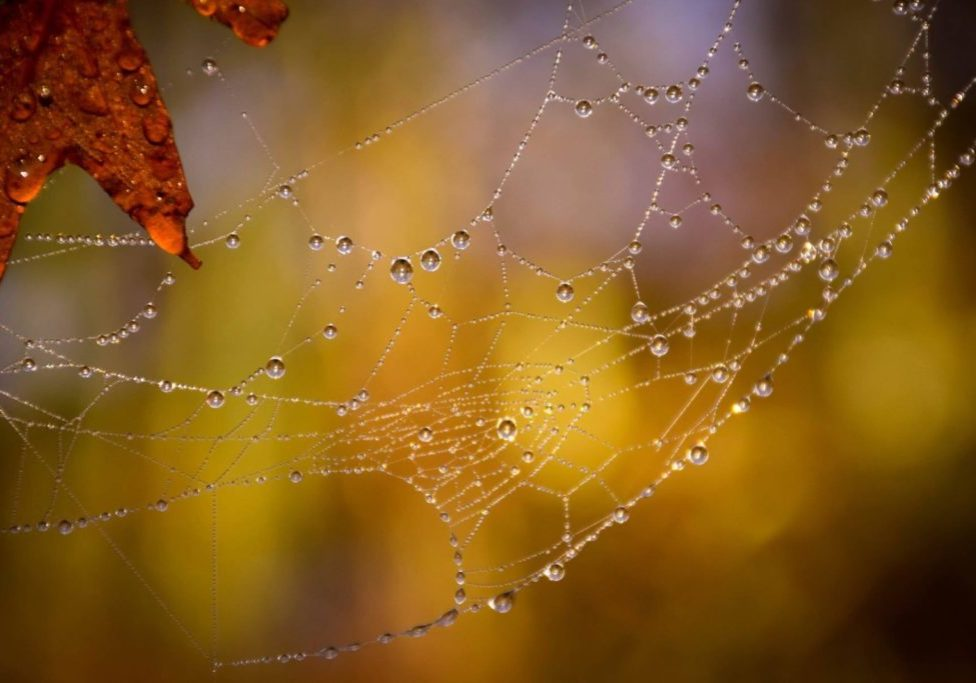 colorful image of spider web in the mist