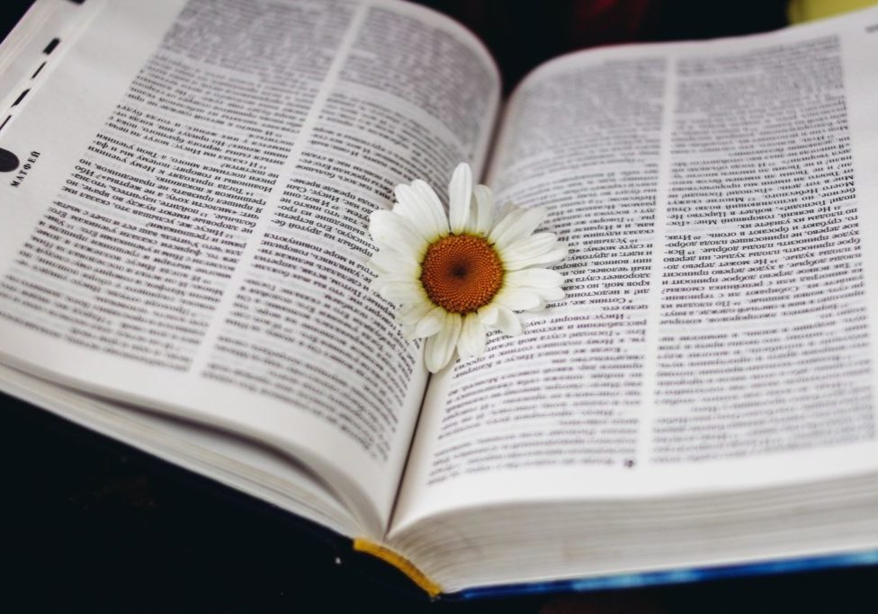 white flower in book