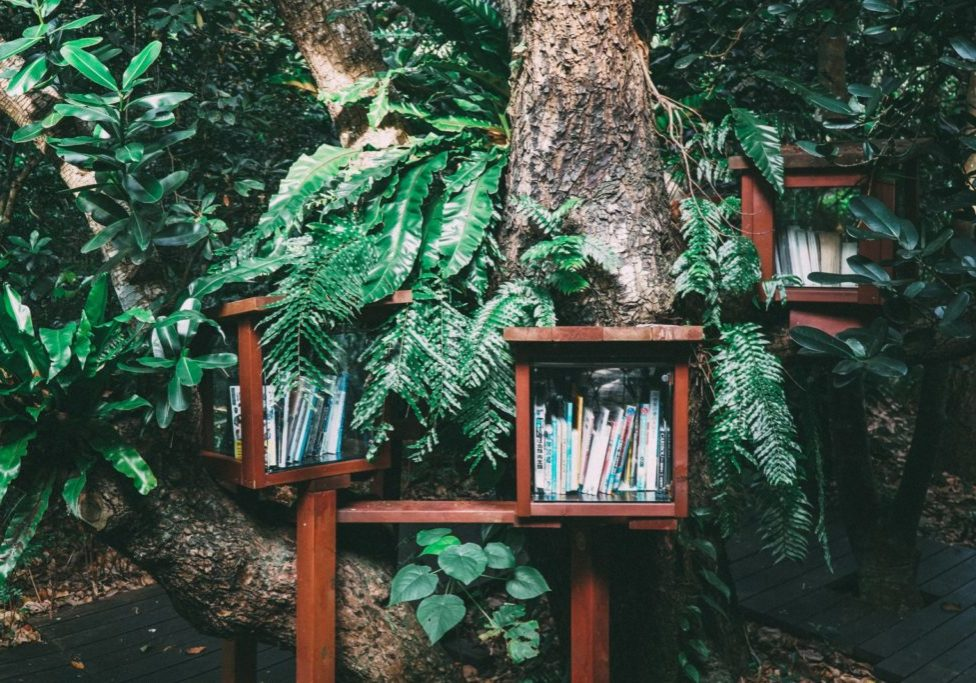 books in a treehouse