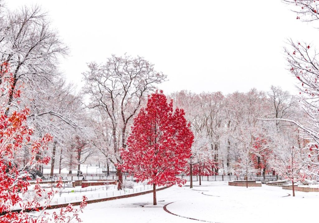 red tree in white snow