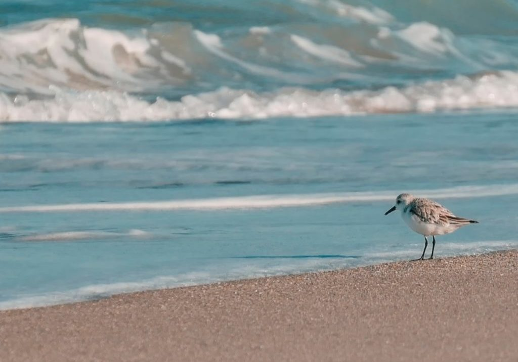 single bird on a seashore