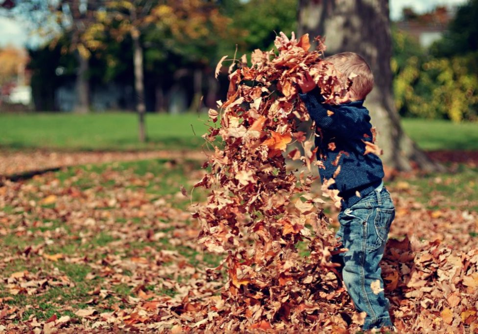boy playing in leaves