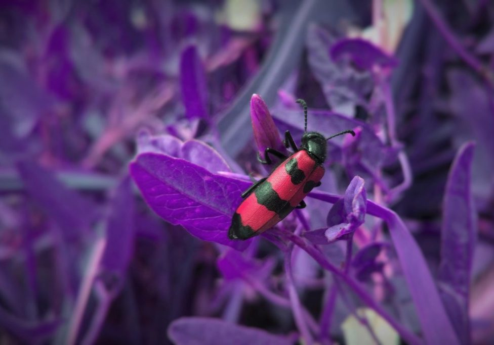 red bug on purple flowers