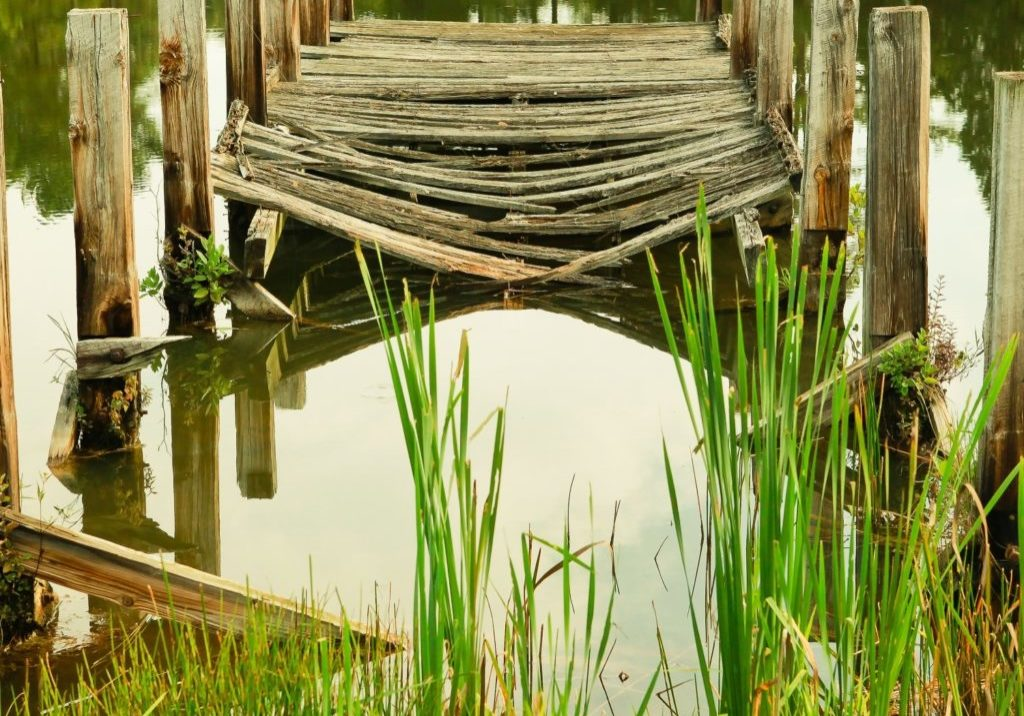 wooden dock with greenery and water